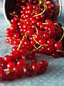 Redcurrants spilling out of a bucket