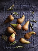 Pears on a wire frame