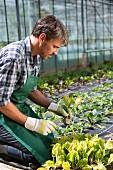 Landwirt beim Einpflanzen von Setzlingen