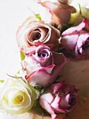 Wedding cake with rose decoration (close-up)
