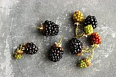 Ripe and underripe blackberries (view from above)