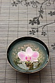 An orchid flower in an Asian bowl with water
