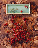 Cherries on the stalk on a plate and on a floral tablecloth (view from above)
