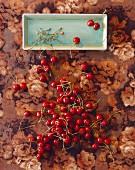 Kirschen mit Stielen auf Teller & geblümter Tischdecke (Aufsicht)