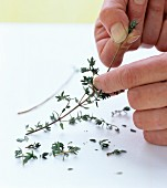 Thyme leaves being plucked off the stem