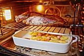 Lamb shoulder roasting in the oven
