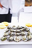 Fresh oysters with lemon and pepper, on ice