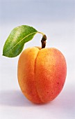 An apricot with leaf