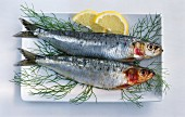 Two sardines in a dish with dill and slices of lemon
