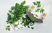 Flat-leaf parsley with a mezzaluna on a chopping board