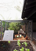 Chicken cage in the garden next to vegetable patch
