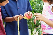 A woman using a measuring tape to measure the circumference of a tomato