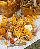 Assorted wild mushrooms with a knife and a brush on newspaper