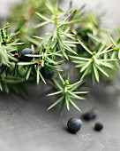 Juniper berries and twigs