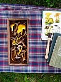 Verschiedene Pilze in Holzkiste und Pilzbücher auf karierter Decke im Garten