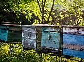 Beehives in Georgia, Caucasus.