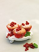 Sweden, Stockholm, Bromma, three cupcakes with redcurrant