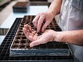 Man planting seeds