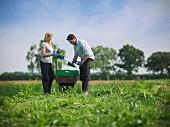 Gärtner beim Schnittlauch ernten