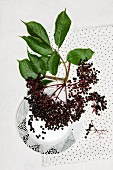 A bunch of elderberries with leaves, on a plate and on a cloth