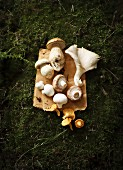 A still life featuring porcini mushrooms, oyster mushrooms, chestnut mushrooms, button mushrooms and chanterelles