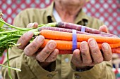 A man holding a bunch of carrots of assorted colours