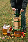 Apples being pressed to make cider