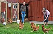 Älteres Paar beim Hühner füttern
