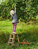 Blond girl picking apples