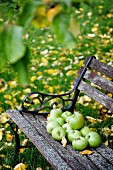 Green apples on weathered garden bench
