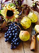 An autumnal still life featuring sunflowers, grapes and pears