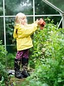 Mädchen giesst Pflanzen im Gewächshaus