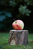 An apple on a tree stump in the garden
