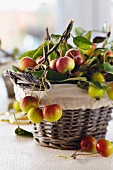 A basket of freshly picked ornamental apples
