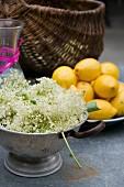 Elderflowers in a sieve next to a bowl of lemons