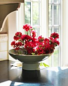Red azailias in bowl by glass doors