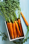 Fresh carrots in a box