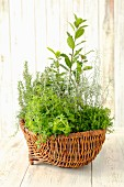 Assorted herb plants in a wicker basket