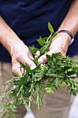 A man's hands holding assorted fresh herbs