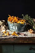 Fresh chanterelles in a tin bucket on a wooden table