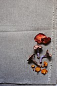 Assorted fresh mushrooms on a piece of cloth