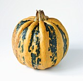 A yellow and green striped squash