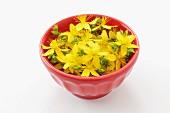 Fresh St. John's wort flowers in a bowl