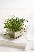 Fresh cress in a metal pot on a stack of paper napkins