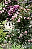 Lauschiges Plätzchen zwischen pink blühenden Rosen