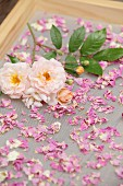Trocknende Rosenblütenblätter auf einem Drahtgeflecht