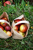 Apples in paper bags in a field