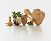 Various mushrooms on a white surface