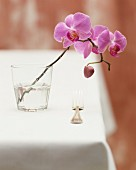 An orchid twig in a glass of water on a table