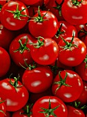 Lots of ripe tomatoes (picture completely fills the image)